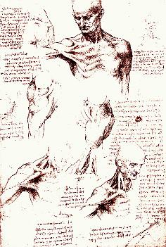 da Vinci - Studir von Schulter und Nacken